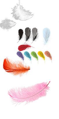 羽毛免抠图素材