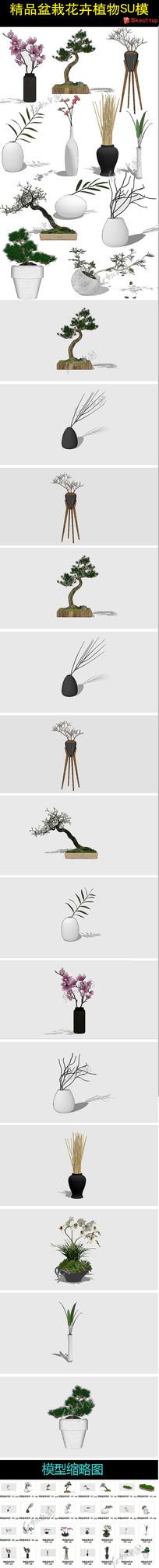 精品盆栽花卉植物SU模型
