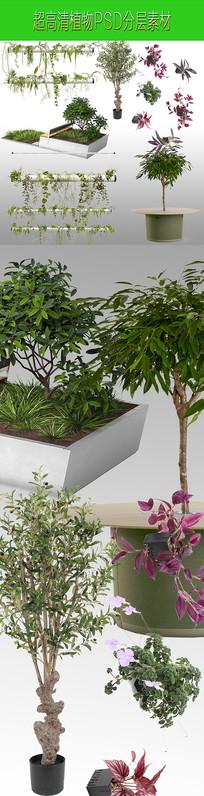 超高清盆摘植物PSD分层素材