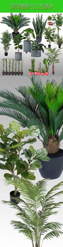 超高清植物PSD分层素材