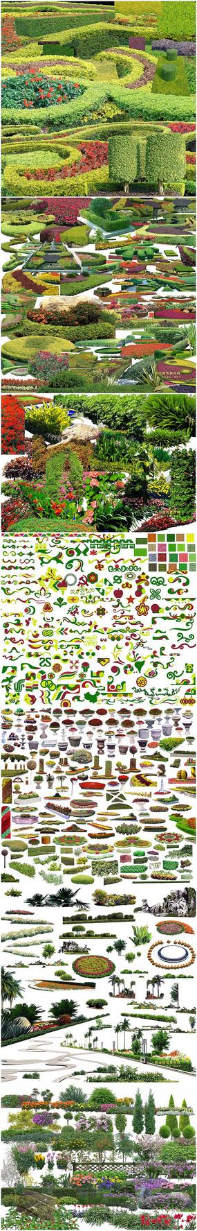花坛植物素材