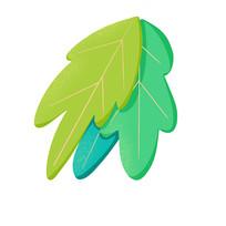 植物叶片图案