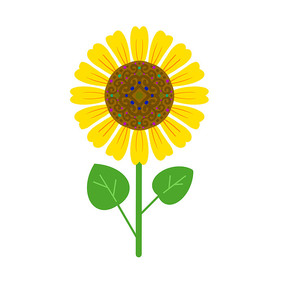 花纹图案向日葵