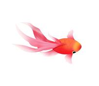 原创手绘卡通观赏鱼