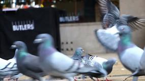 广场上的鸽子视频素材