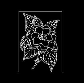 花朵牡丹花富贵花植物CAD线稿素材