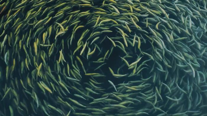 水池密集鱼群视频素材