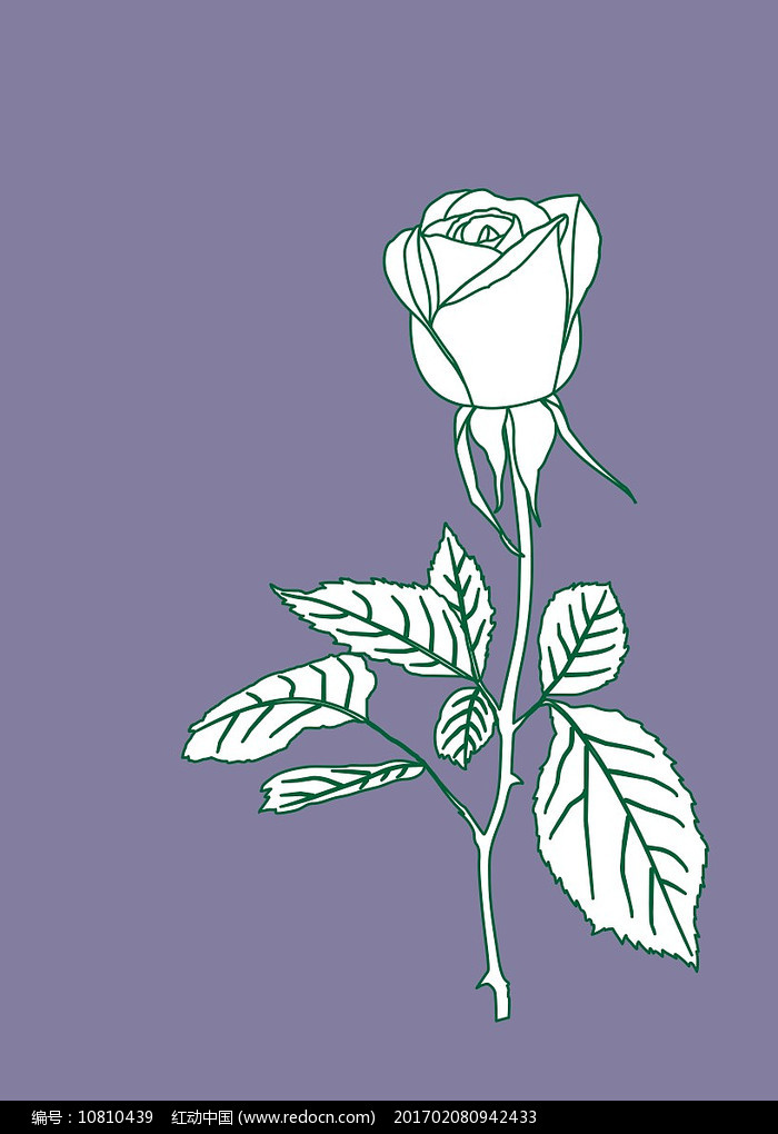 玫瑰花线稿图片