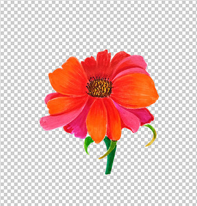 花朵手绘红色花朵PNG