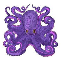 手绘年画矢量章鱼