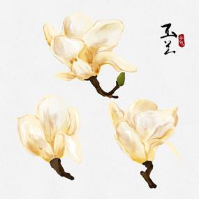原创水彩玉兰花