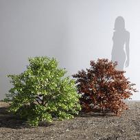 现代紫荆灌木模型