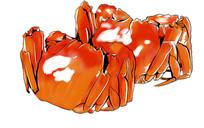 手绘螃蟹美食插画