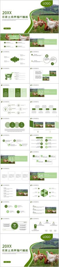 农家土鸡养殖家禽畜牧业养殖PPT模板