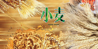 绿色小麦宣传海报
