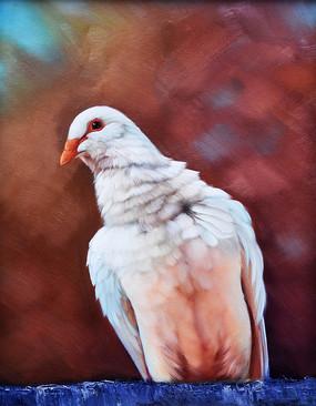 纯手绘鸽子油画无框画