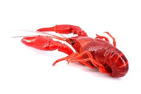 红彤彤的小龙虾