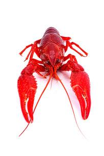 红通通的小龙虾