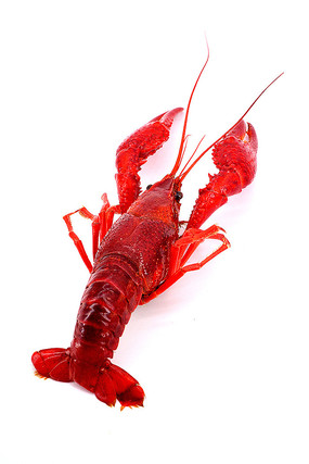 熟透的小龙虾