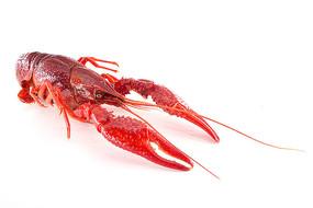 小龙虾熟了的图片