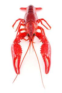 小龙虾正面高清图
