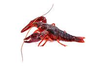 新鲜小龙虾图片