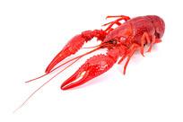 煮熟的小龙虾图片