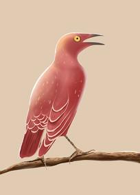 原创手绘扁平插画动物小鸟元素