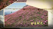 春天花季花开视频模板