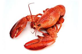 红通通的大龙虾