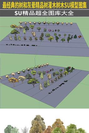 最经典的树灰晕精品树灌木树木SU模型图集