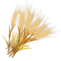 麦穗/稻穗/手绘