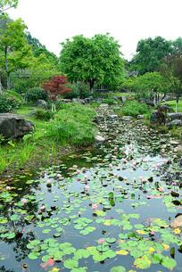 公园莲花池