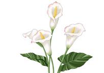 原创手绘插画小清新质感植物花卉素材PSD