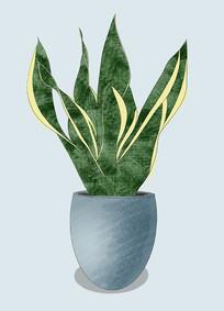 原创手绘插画植物虎皮兰元素