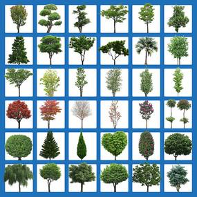 卡通树素材花草树木小树大树园林绿化植物
