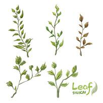 原创五款手绘水彩叶子