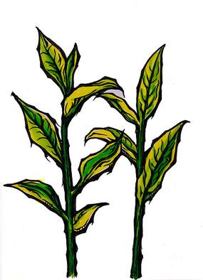 茶树叶原创手绘稿
