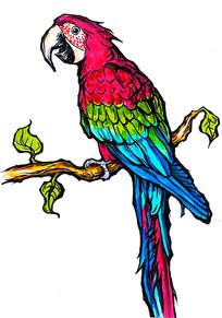 鹦鹉原创手绘稿