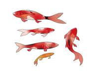 原创手绘动物中国风锦鲤卡通插画