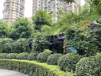 室外植物花坛灌木廊架植物意向