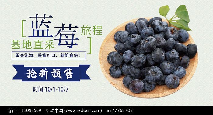 蓝莓采摘海报图片