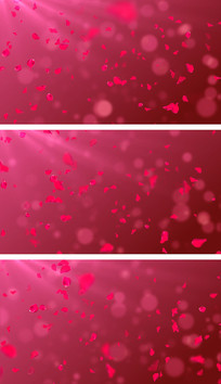 4K感恩节玫瑰花萦绕婚礼主题背景视频素材