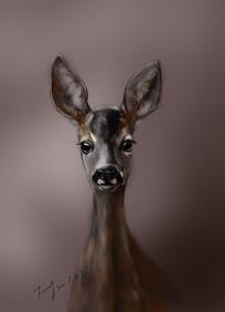 小鹿手绘插画