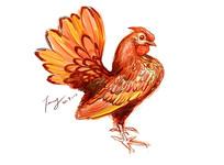 公鸡原创插画