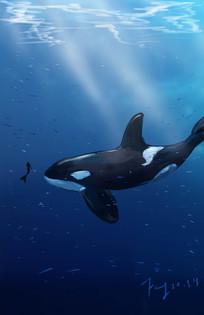 蓝色海洋之鲸手绘插画