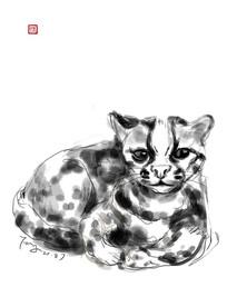 小豹子手绘插画