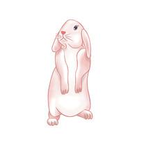 原创手绘兔子