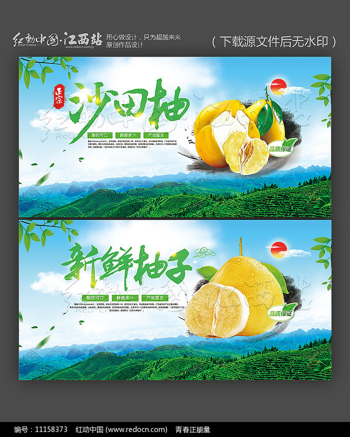 新鲜柚子沙田柚宣传海报设计图片