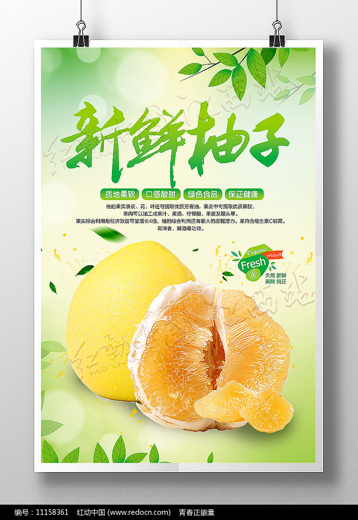 新鲜柚子宣传海报设计图片